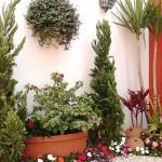 05_casa_residencia_toke_verde_paisagismo