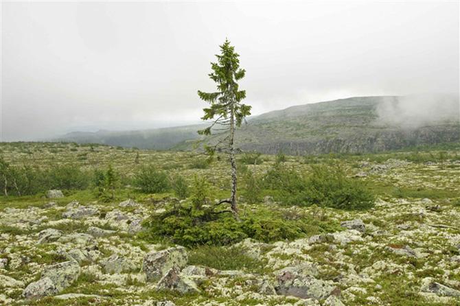 Dia da Árvore: conheça as árvores mais antigas do mundo