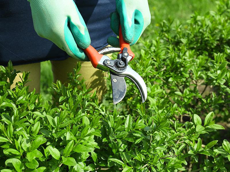Manutenção de Jardim