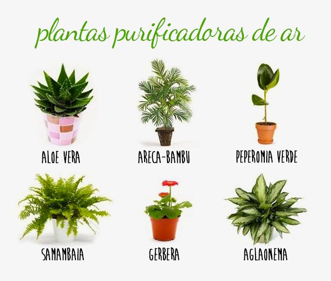 10 Plantas que purificam o ar dentro de casa